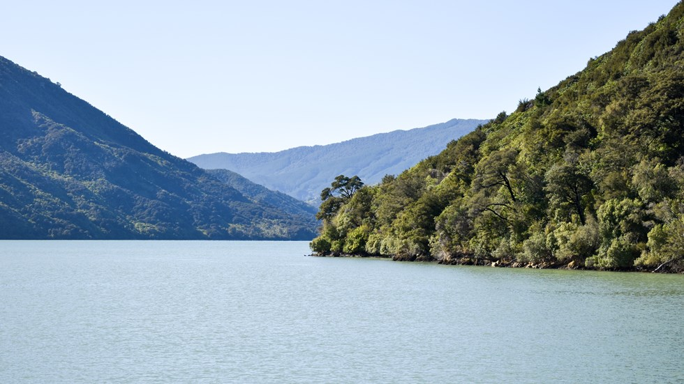 Bush covered hill and bay seen from onboard the Pelorus Mail Boat.