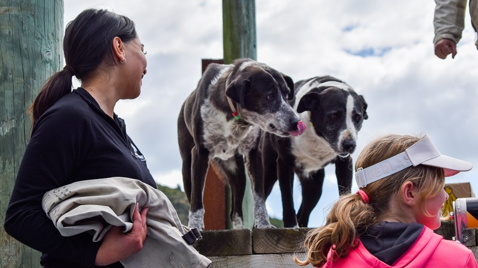 Deckhand Tiria greets her four-legged friends at a jetty on a Pelorus Mail Boat cruise.