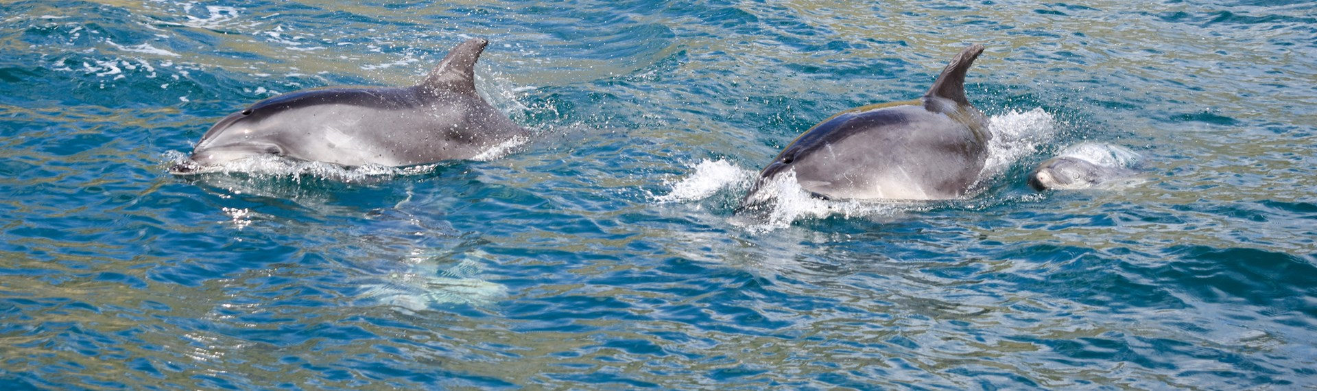 Two dolphins spotted from the Pelorus Mail Boat.